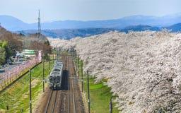 Um trem c?nico com flor de cerejeira imagem de stock royalty free