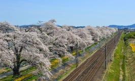 Um trem c?nico com flor de cerejeira imagem de stock