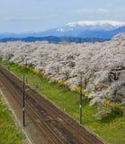 Um trem c?nico com flor de cerejeira fotos de stock