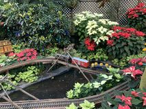 Um trem pequeno que canelas através das flores na casa da flor fotografia de stock royalty free