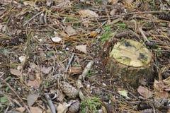 Um tronco de árvore na terra que cerca pelas folhas Imagem de Stock Royalty Free