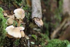 Um tronco de árvore na terra que cerca pelo fundo dos cogumelos Fotografia de Stock Royalty Free