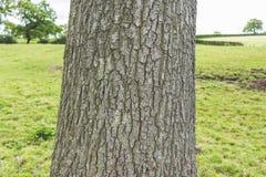 Um tronco e de árvore são textura Fotografia de Stock Royalty Free
