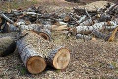 Um tronco e microplaquetas de árvore do corte Fotografia de Stock Royalty Free