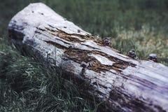 Um tronco na floresta, um resto de uma árvore velha Textura de madeira bonita com contrastes e cores fortes fotografia de stock royalty free