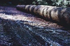 Um tronco na floresta, um resto de uma árvore velha Textura de madeira bonita com contrastes e cores fortes fotografia de stock