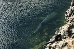Um tubarão na água imagem de stock