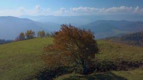 Um turista com cursos de uma trouxa nas montanhas Carpathian video estoque