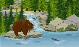 Um urso marrom do urso trava saltar cor-de-rosa dos salmões de um córrego ilustração royalty free