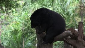 Um urso preto em um tronco de árvore filme