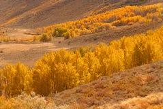 Um vale enchido com as árvores douradas do álamo tremedor Imagens de Stock Royalty Free