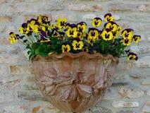 Um vaso colorido Foto de Stock Royalty Free