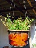 Um vaso de flores de suspensão Fotos de Stock