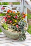 Um vaso de flores de terra com as plantas de jardim da rocha Foto de Stock