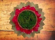 Um verde Moss Digital Newborn Backdrop do círculo para fotógrafo recém-nascidos fotos de stock
