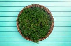 Um verde Moss Digital Newborn Backdrop do círculo para fotógrafo recém-nascidos imagem de stock