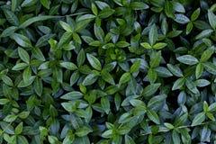 Um verde sae de cima de Fotos de Stock