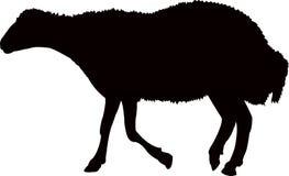 Um vetor da silhueta da cor do preto do corpo dos carneiros ilustração royalty free