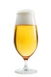 Um vidro da cerveja Imagem de Stock Royalty Free