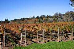 Um vinhedo do outono foto de stock