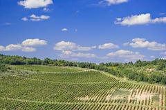 Um vinhedo em Macedónia fotos de stock