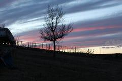 Um vinhedo pequeno e um céu mágico Imagem de Stock