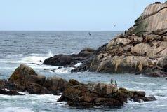 Um viveiro de leões de mar do sul em Vina del Mar Imagem de Stock