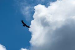 Um voo da águia no céu Imagem de Stock