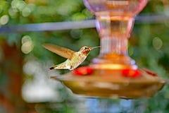 Um voo do colibri após o alimentador foto de stock royalty free