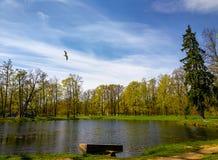 Um voo do pássaro sobre uma lagoa fotografia de stock