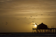 Um Willet na praia Foto de Stock Royalty Free