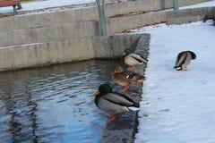 Um winterday agradável Fotografia de Stock