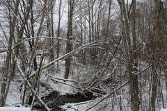 Um winterday agradável Imagens de Stock Royalty Free