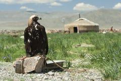 Um yurt e uma águia da caça fotos de stock royalty free