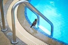 Uma água potável tropical pequena do pássaro em uma associação do hotel Fotografia de Stock