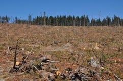 Uma área da plantação do pinho do radiata do corte com floresta Fotografia de Stock