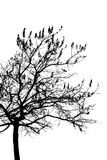 Uma árvore é isolada no branco fotos de stock