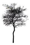 Uma árvore é isolada no branco fotografia de stock royalty free