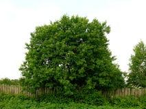 Uma árvore Imagem de Stock Royalty Free