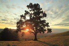 Uma árvore Fotografia de Stock Royalty Free