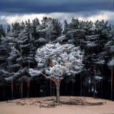 Uma árvore foto de stock