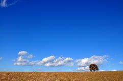 Uma árvore, algum marrom, um azul enorme e uma parte da nuvem branca Fotos de Stock