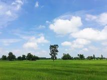 Uma árvore alta no meio do campo verde Fotos de Stock Royalty Free