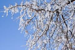 Uma árvore após a queda de neve. Fotografia de Stock Royalty Free