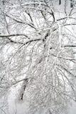 Uma árvore após a queda de neve. Imagens de Stock