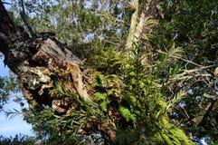 Uma árvore bonita imagens de stock royalty free