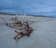 Uma árvore caída na praia Foto de Stock Royalty Free