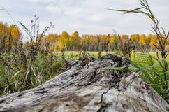 Uma árvore caída velha em um campo bonito do outono imagem de stock royalty free