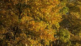 Uma árvore com as folhas em outonal Imagem de Stock