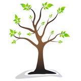 Uma árvore com as folhas verdes das folhas Árvore bonita fotos de stock